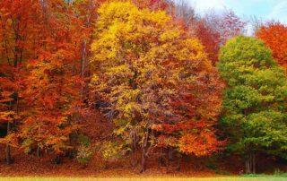 Steuerliche-Neuigkeiten-Herbst